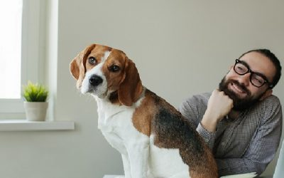 What your dog's breed says about your work personality